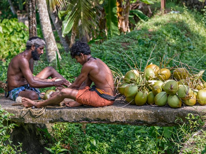 Coconut pickers / Kovalam / India/ Matthieu Waddell Photo